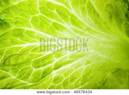 Macro Texture Of Green Lettuce Leaves