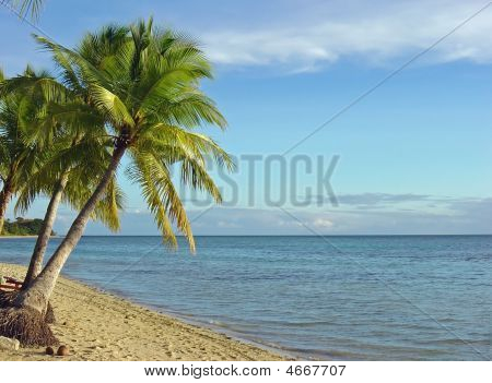 Fijian beach and coconut palm trees at Plantation Island resort Malolo Island Fiji. poster