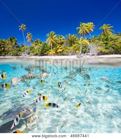 Beautiful tropical island in French Polynesia under and above water