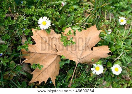 Spring Flower And Autumn Leaves