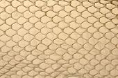 a shed snake skin is seen with light coming through it in this background texture of snake scales. poster