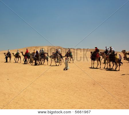Camel Expedition in Egypt