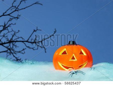 Pumpkin And Branch