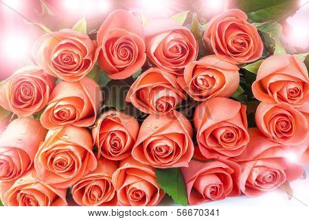 Pink Roses With Sunspots
