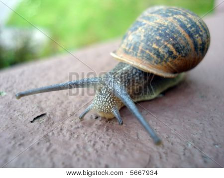 Snail crawling over garden wall