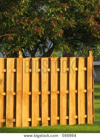 Wood Enclosure Privacy Fence around Garden