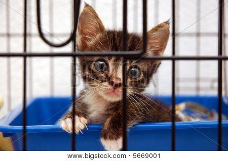 cute kitten in cage
