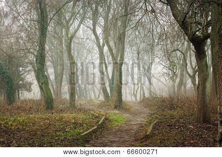 Morning Walks In Fog