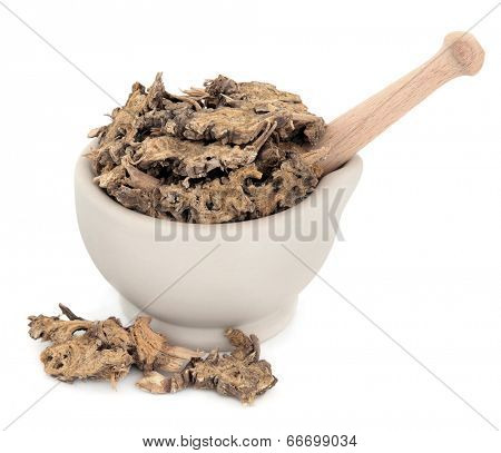 Ligustium root chinese herbal medicine in a stone mortar with pestle over white background. Gao ben.