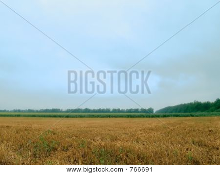 overcast and fields
