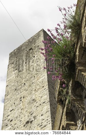 Tower And Flower