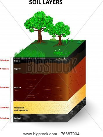 Soil Formation and Soil Horizons