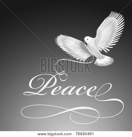 Dove bird of peace