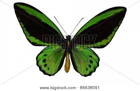 macro photo of green and black butterfly isolated on white background