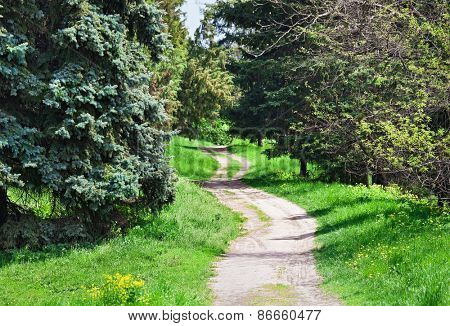 Rural road in coniferous forest, sunny spring day