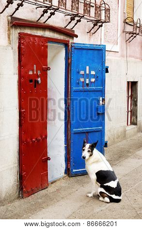 Dog waiting for his master in front of a store