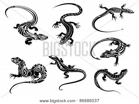 Black lizards with tribal ornament