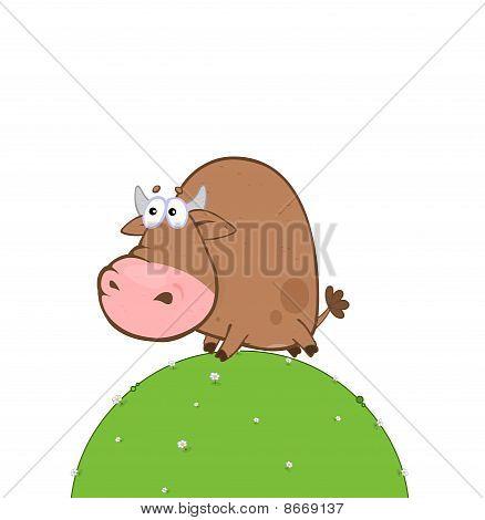 Resettlement Of Bull