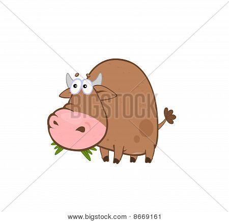 Bull That Chew The Grass