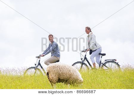 Couple having bicycle tour with bike at levee with sheep