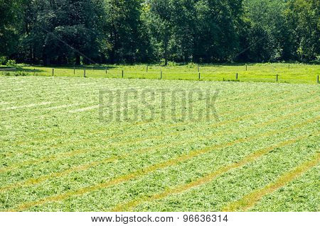 Mown Alfalfa Field