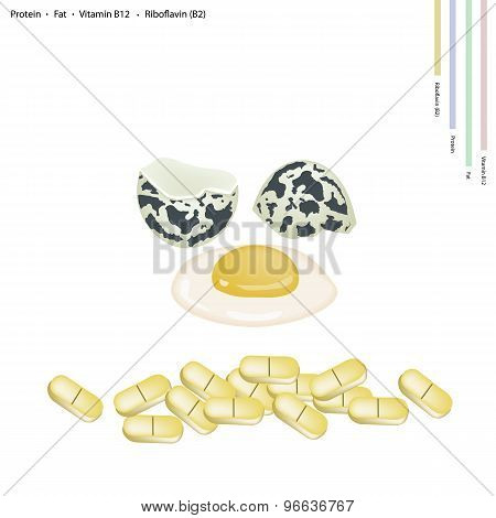 Fresh Quail Eggs with Protein, Fat, Vitamin B12 and B2