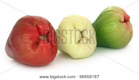 Fresh Water Apple Or Rose Apple