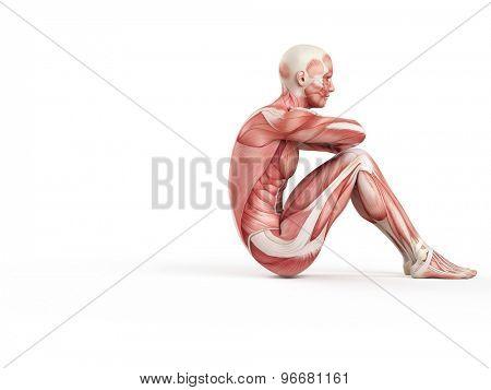 exercise illustration - negative situp