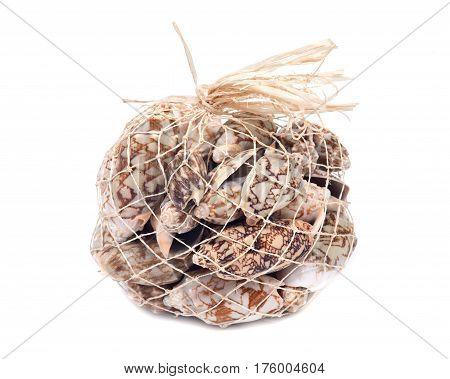 Decorative bag of bat volute sea shells, cymbiola vespertilio, volutidae family, isolated on white bacground