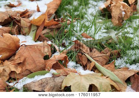 Dry leaves on the snowbound green grass in park. Beautiful autumn day.