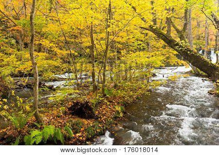 Oirase Mountain Stream in Japan