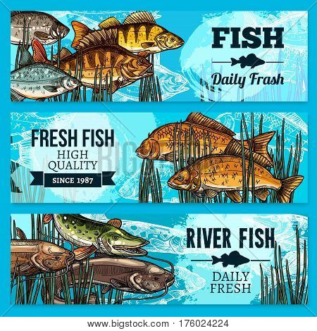 Fresh fish sketch banners for sea food restaurant or market store. Vector set of fisherman catch carp and pike, fresh sheatfish or catfish, river crucian and flounder and salmon or trout