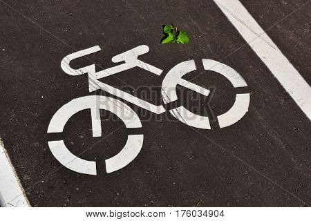 White bicycle road sign on an asphalt road.
