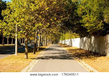 Boulevard from Carcavelos station to the beach - Warm late summer light and autumn coloured leaves