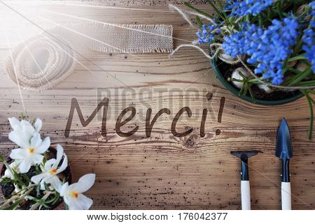 French Text Merci Means Thank You. Sunny Spring Flowers Like Grape Hyacinth And Crocus. Gardening Tools Like Rake And Shovel. Hemp Fabric Ribbon. Aged Wooden Background