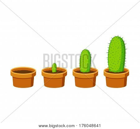 Phases cactus growth islated on white background. Cactus in flower pot in flat style. Timeline infographic of growth process. Vector Illustration