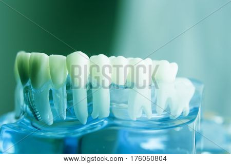 Dental Teeth Dentistry Model