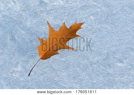 Dry maple leaf on an ice pattern on a water surface.