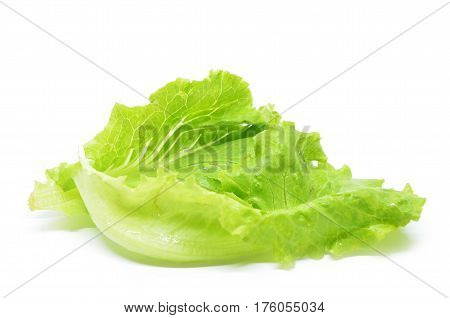Green Chinese Lettuce