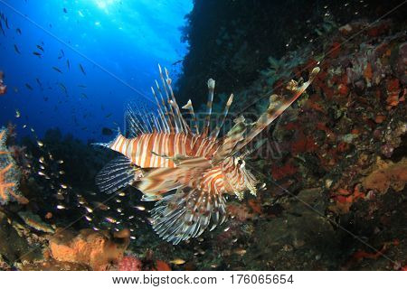 Lionfish, fish and coral in ocean