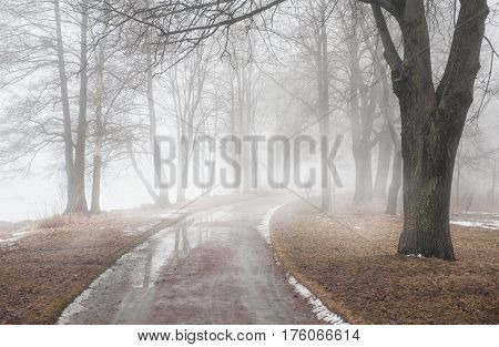Road In Dark Foggy Forest. Loneliness Concept