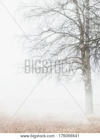 Foggy Moody Scene With Leafless Tree