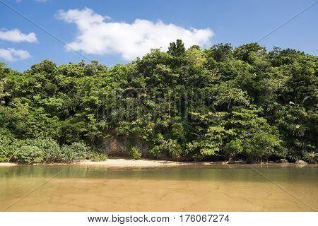 River and green jungle under blue sky in Ishigaki island