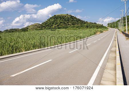 Road beside green sugarcane field in Ishigaki island