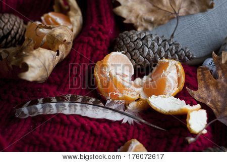 autumn still life with feather and tangerines in a chunky knit