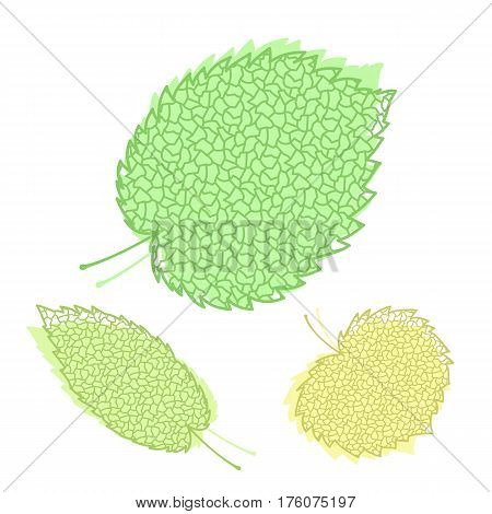 Green and yellow leaves of trees and plants isolated on white background