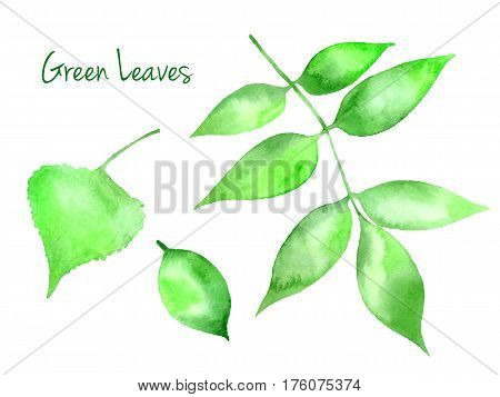 Set of green vector abstract watercolor leaves birch, pear, ash-tree isolated on white background