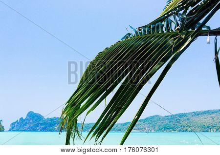Jungle and Sea Coconut Getaway
