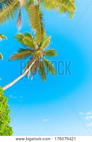 Green Getaway Palm View