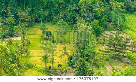 Rice tarrace and small village in Sidemen, Bali, Indonesia.